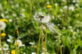Qu'est-ce qu'une allergie? Les symptômes, les types et les tests